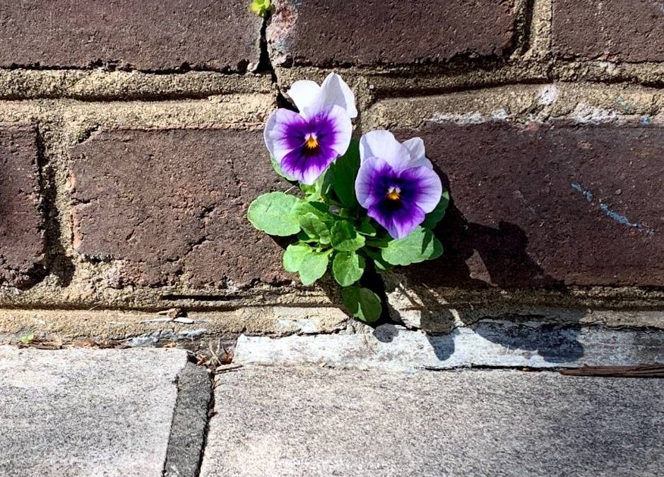 Flowers growing through the cracks of a brick wall